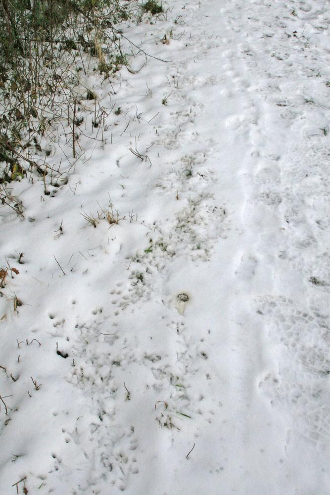 ...zwischen Hecke und Gehweg ist der Schnee merkwürdig perforiert wie ein Käse..., 30.12.2014 Foto: Bernhard Glüer