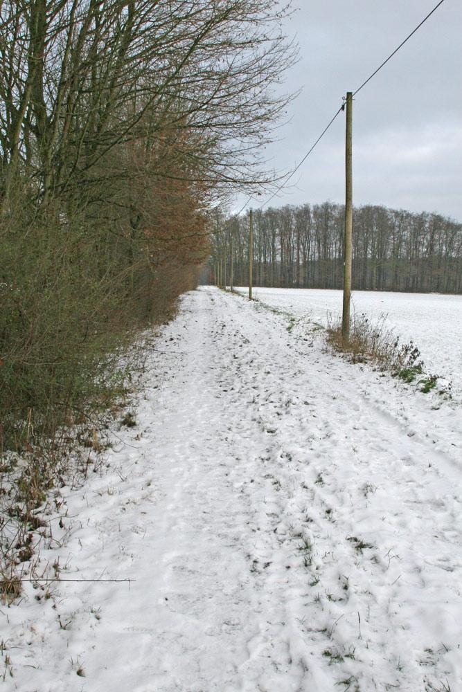 Hier erwartet man nicht unbedingt Limikolen - außer vielleicht eine Waldschnepfe..., 30.12.2014 Foto: Bernhard Glüer
