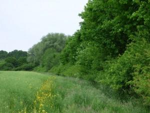 Solche Feldhecken mit höheren Gehölzen scheinen ideal für den Gelbspötter. 24.05.15 Foto: Hartmut Peitsch