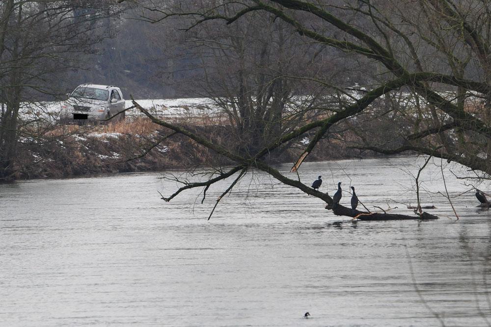 Hier besagtes Auto am Ufer der Ruhr, im Vordergrund einige Kormorane und eine von drei männlichen Schellenten am 31.01.2015 Foto: Marvin Lebeus