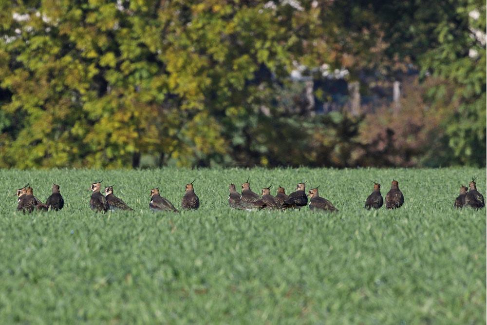 ... und scheinen den `goldenen Oktobertag´ zu genießen, 28.10.2015 Foto: Bernhard Glüer