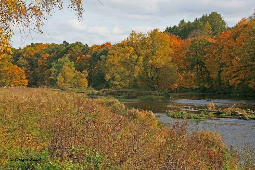 Herbst im NSG Ruhrstau bei Wickede.......am 26.10.15 Foto: Gregor Zosel