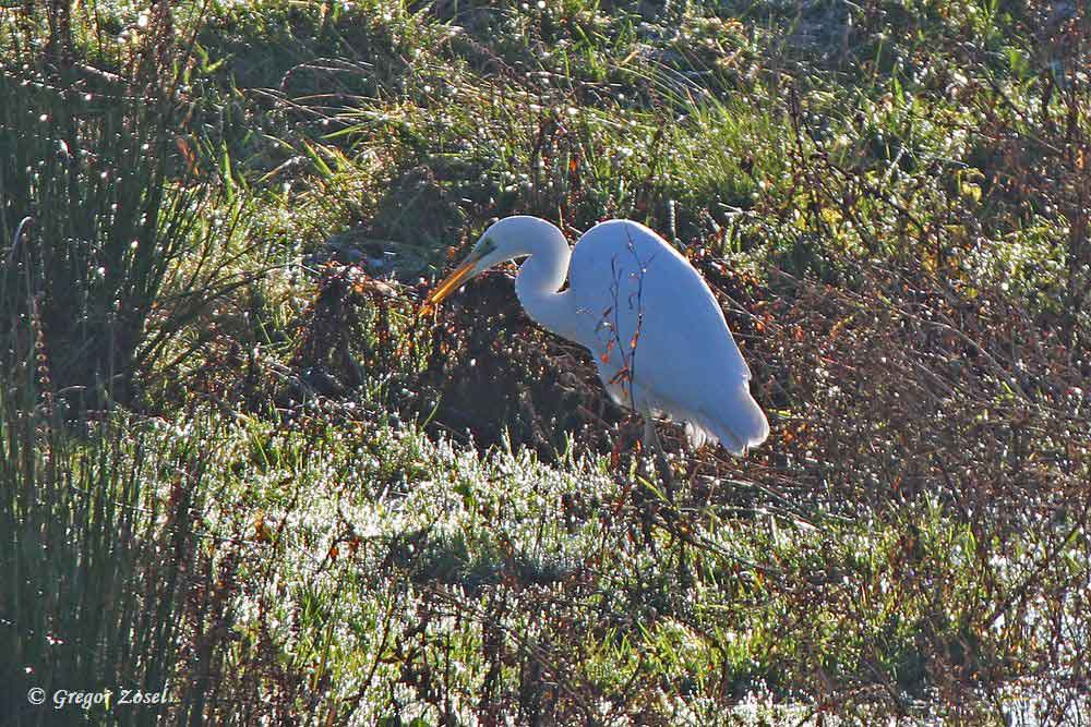 ...etwas Kleines gefangen.....am 27.11.15 Foto: Gregor Zosel
