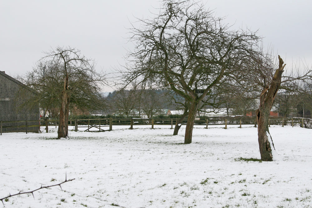 Winterlicher Steinkauzlebensraum im Süden von Frdbg.-Ostbüren - mit Steinkauzröhre im mittleren Apfelbaum..., 01.02.2015 Foto: Bernhard Glüer