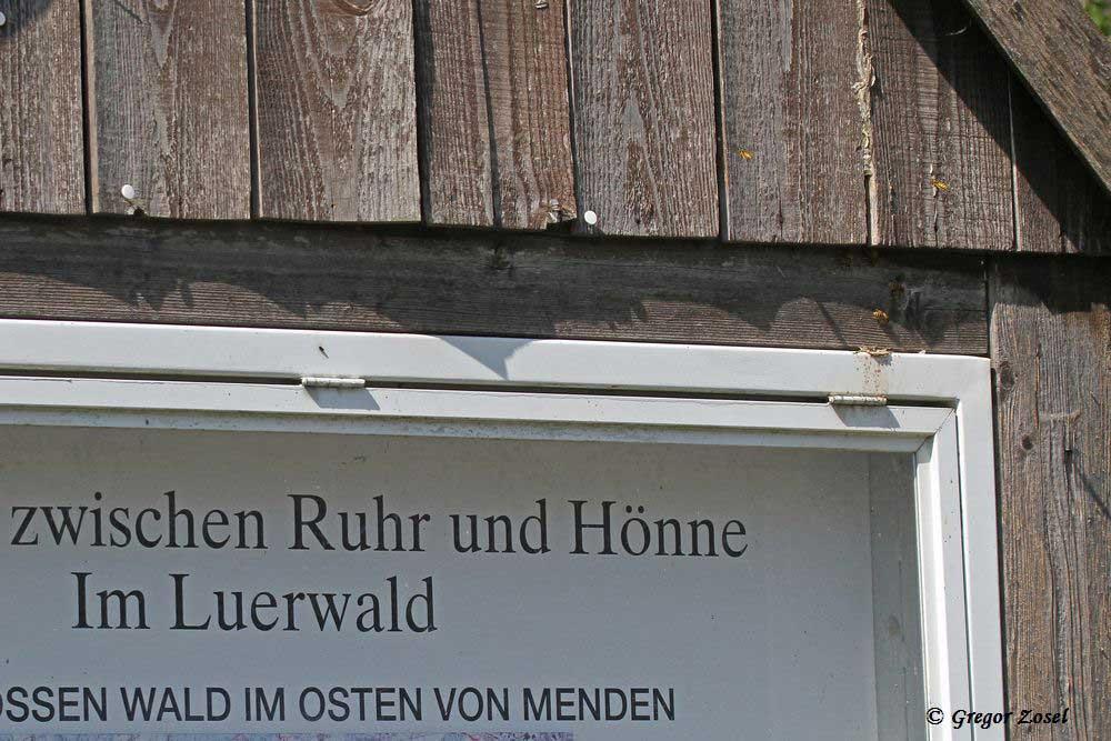 Am Wanderparkplatz schon unsere erste Entdeckung. Ein Wespennest im Holzgestell der Wanderkarte macht das ungestörte Beobachten dieser sozialen Insekten möglich.....am 11.07.15 Foto: Gregor Zosel