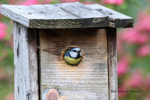 Im Garten Haus Aden, Seseke Kamen, 18.05.16. Foto: G.Reinartz