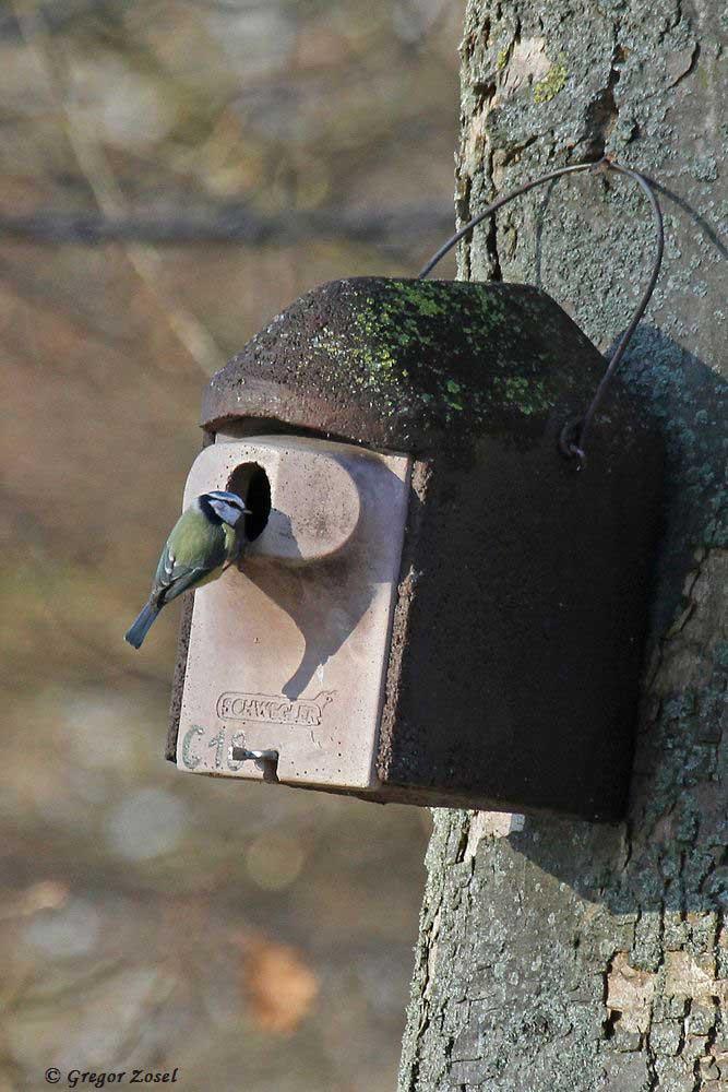 Trotz eisiger Temperaturen werden schon im Park die Nistkästen für die kommende Brutsaison begutachtet.....am 31.12.16 Foto: Gregor Zosel
