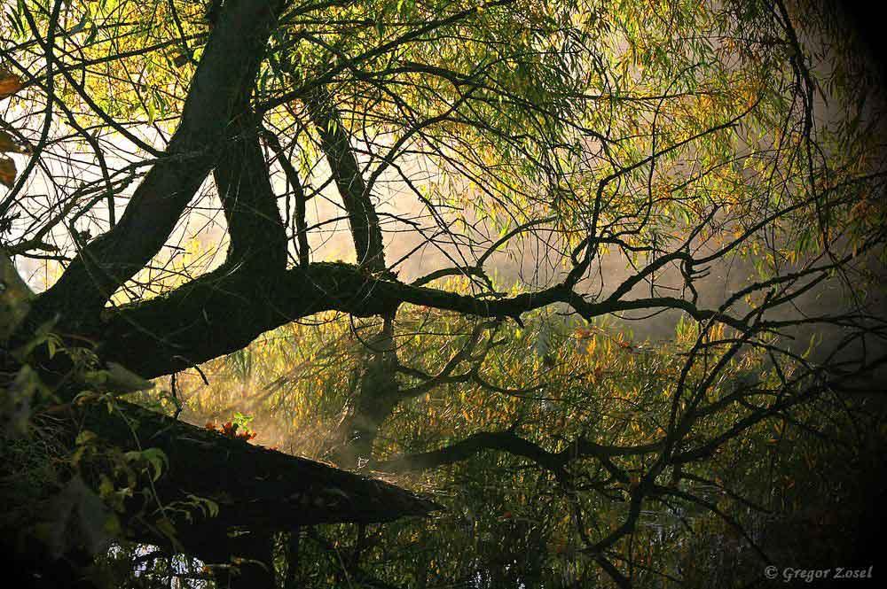 Der Morgennebel auf der Ruhr zusammen mit der aufgehenden Sonne bringt eine ganz besondere Stimmung .....am 30.10.16 Foto: Gregor Zosel