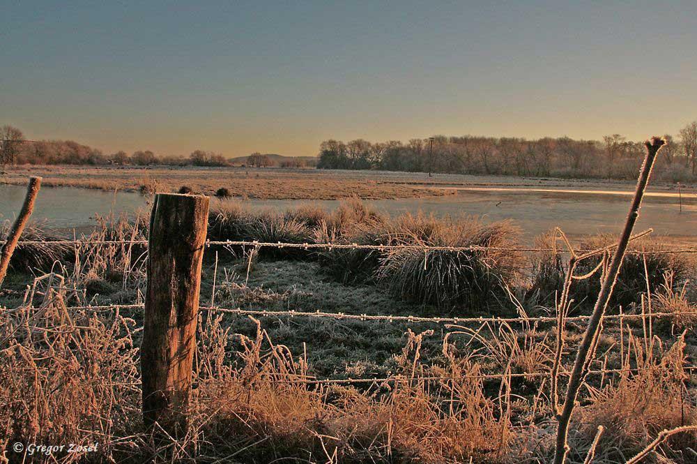 Die letzten Grüße von der Kiebitzwiese in diesem Jahr.....am 31.12.16 Foto: Gregor Zosel