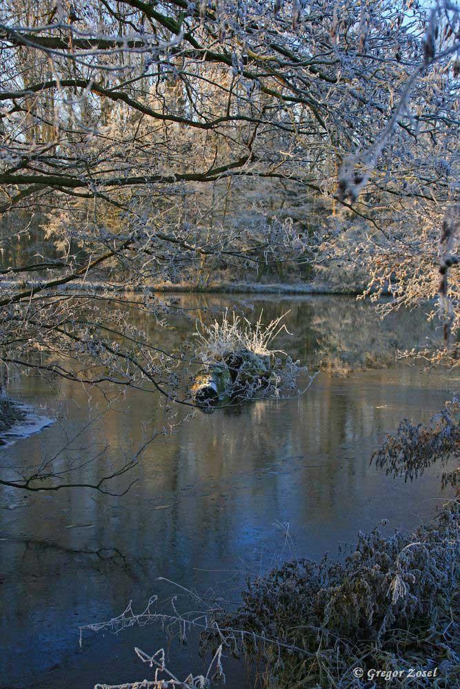Winterliche Rammbachmündung.....am 31.12.16 Foto: Gregor Zosel