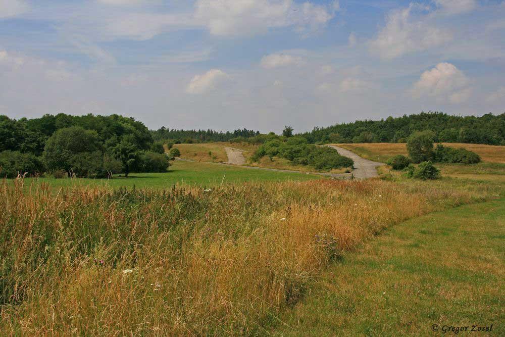 Eingebettet in der Waldlandschaft bei Apricke liegt der ehemalige Truppenübungsplatz.....am 18.07.17 Foto: Gregor Zosel