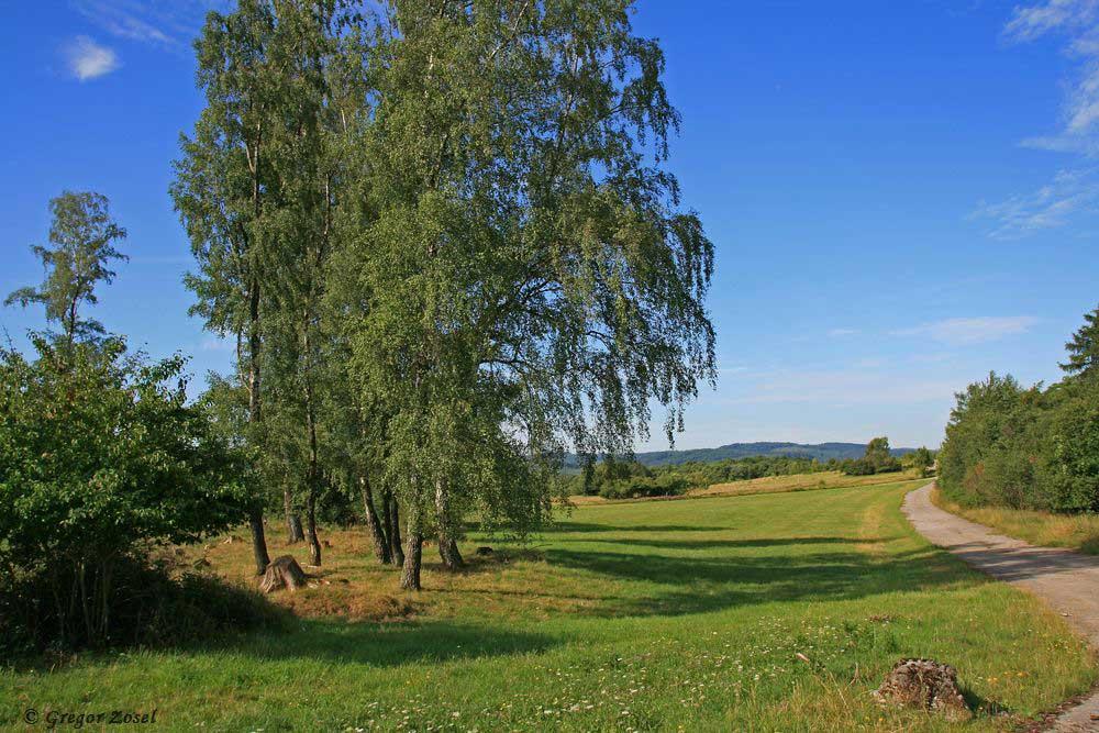Über die alten Panzerstrassen ist das Laufen in dem weiträumigen Gelände bequem. Entlang der Wege kann man die Natur super beobachten, ohne die Wiesen betreten zu müssen.....am 18.07.17 Foto: Gregor Zosel