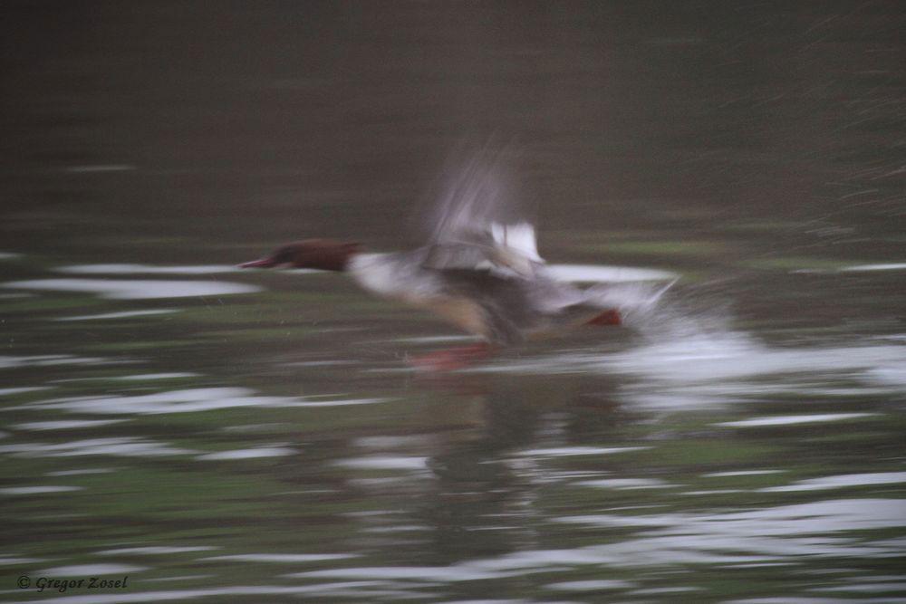 Die Unschärfe setzt die Dynamik beim Starten bestens ins Bild....am 17.12.17 Foto: Gregor Zosel