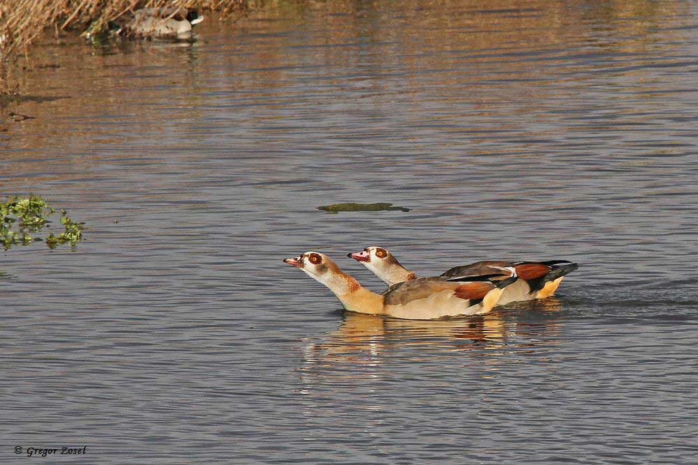 Balz zu Lande und zu Wasser.... am 19.11.17 Foto: Gregor Zosel