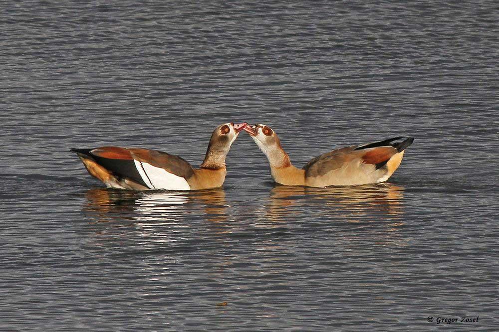 Ein Küsschen in Ehren, kann niemand verwehren.... am 19.11.17 Foto: Gregor Zosel