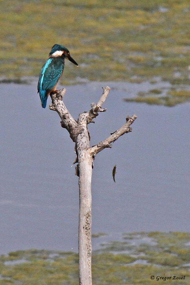 Hoppala! Fisch verloren....am 24.08.18 Foto: Gregor Zosel