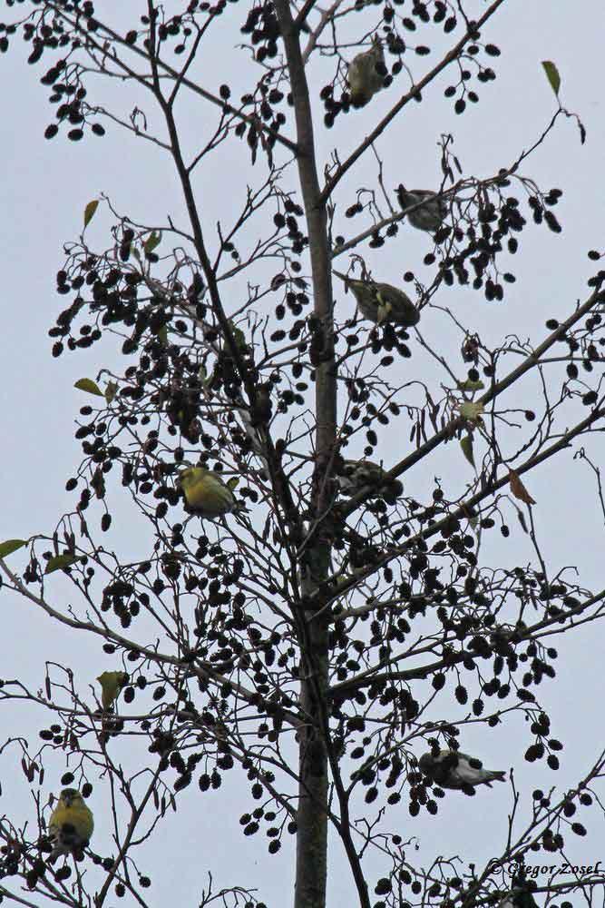 Gut verteilt in den Stockwerken der Bäume....am 05.12.18 Foto: Gregor Zosel