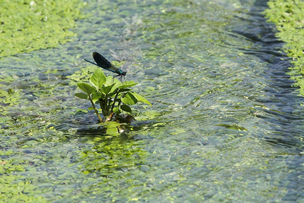 Lebensraum beider Prachtlibellenarten an der Amecke. Foto H. Knüwer