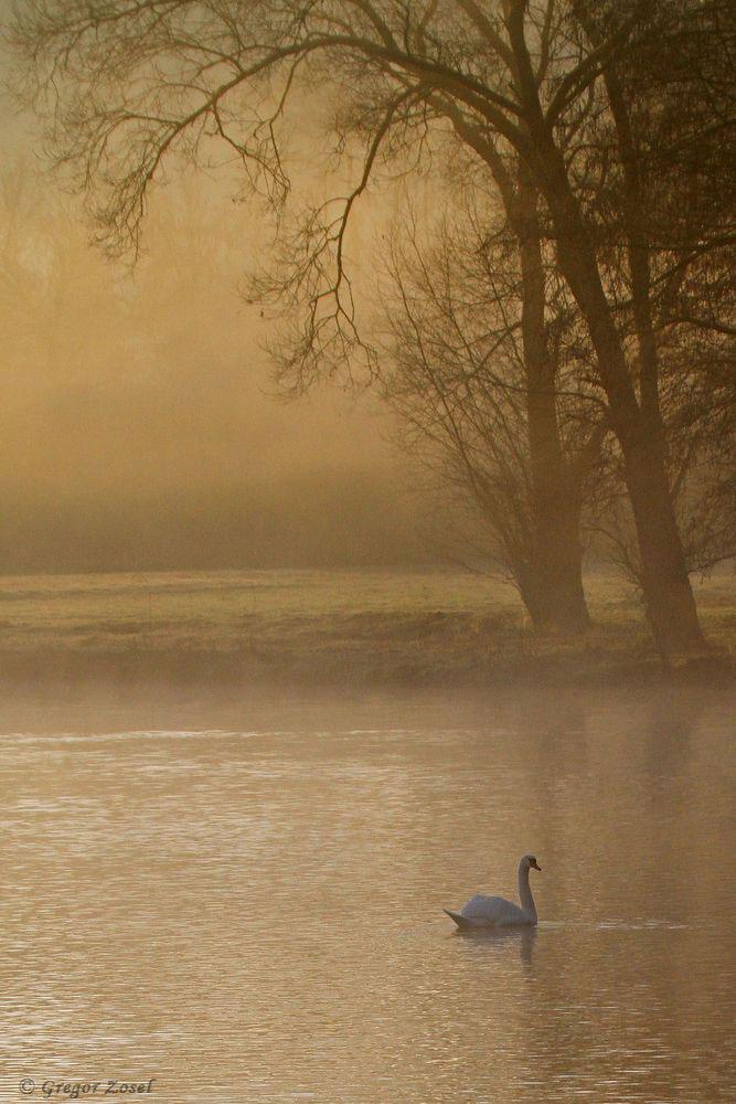 Morgenstimmung an der Rammbachmündung......am 27.12.18 Foto: Gregor Zosel