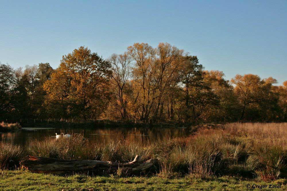 Herbstliche Kiebitzwiese an der Alten Eiche......am 07.11.18 Foto: Gregor Zosel
