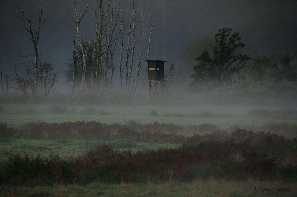 Der Blick über die Sichlerbucht erinnert an eine Morgenstimmung in einem Moorgebiet.......am 16.09.18 Foto: Gregor Zosel