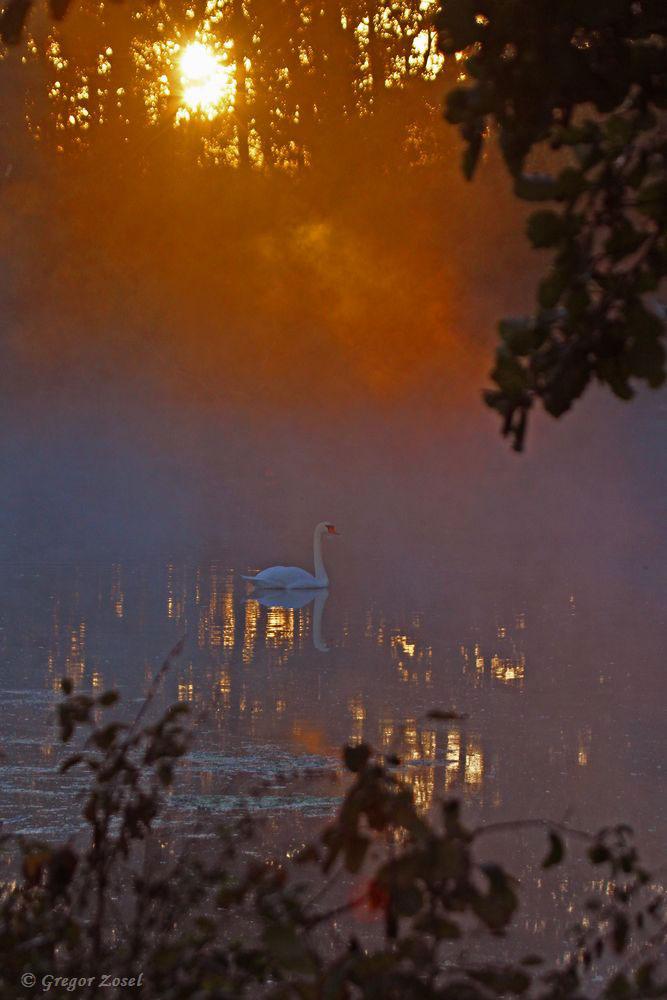 Ein schönes Bild, wenn die Morgensonne die Ruhr dampfen lässt.....am 30.09.18 Foto: Gregor Zosel