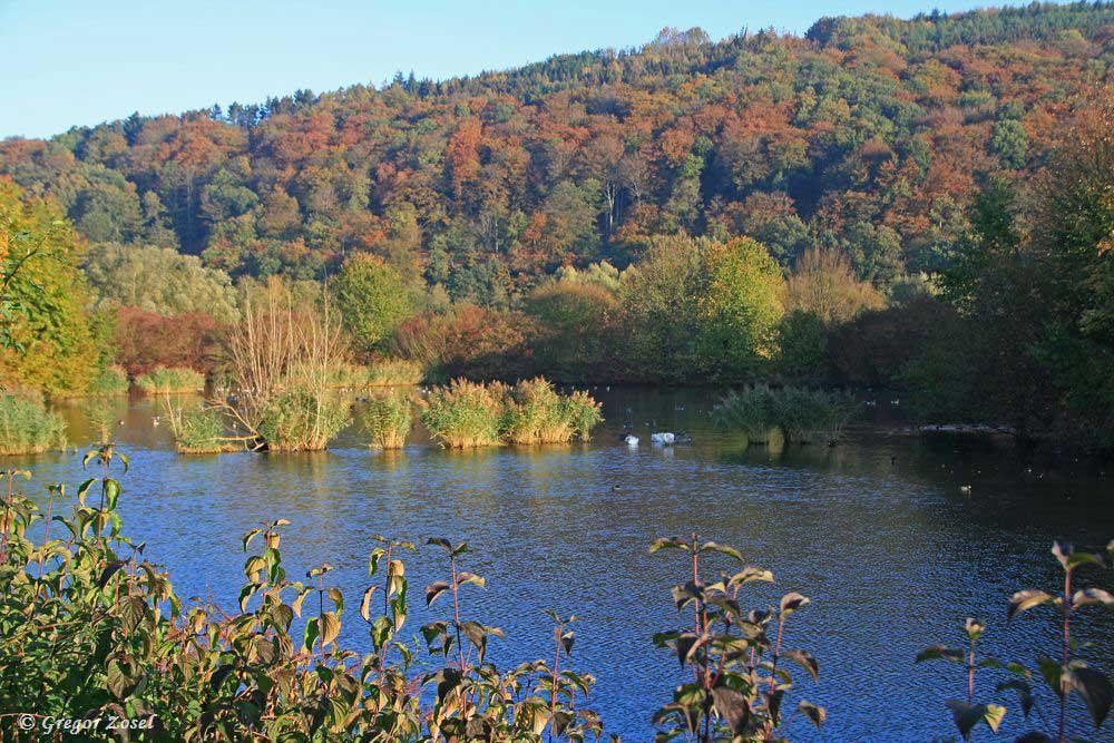 Ein kleines Paradies für Wasservögel im Ruhrtal.....am 21.10.18 Foto: Gregor Zosel