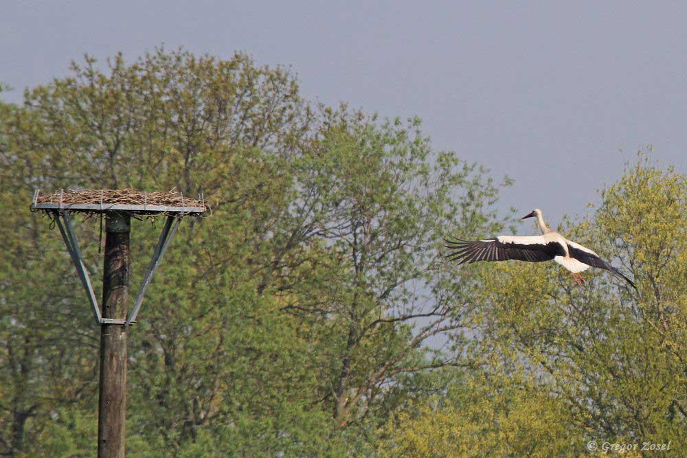 Landeanflug.....am 21.04.18 Foto: Gregor Zosel