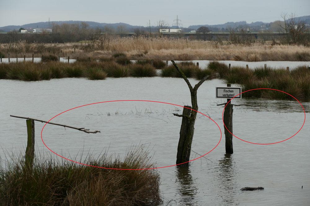 Wieder überschwemmte Röllingwiese mit gerodeten und jetzt überstauten Flatterbinsenbereichen, Schwerte 16.01.2019 Foto: Hans Joachim Göbel