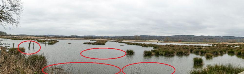 Wieder überschwemmte Röllingwiese mit zurückgeschnittenen und jetzt überstauten Flatterbinsenbereichen, Schwerte 16.01.2019 Foto: Hans Joachim Göbel