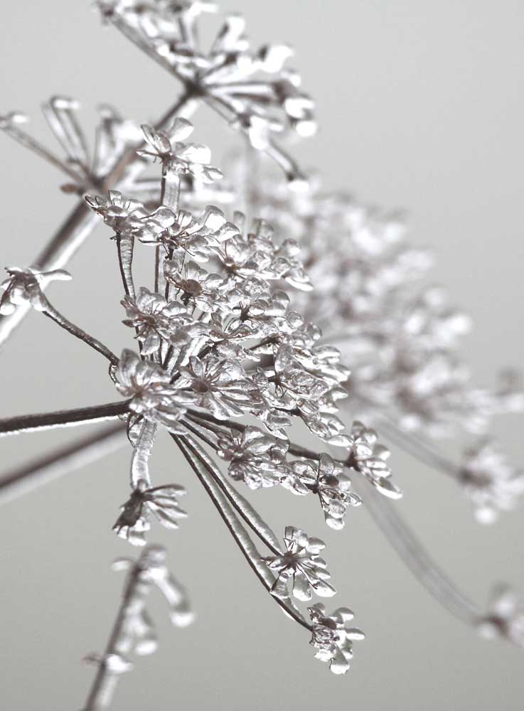 Filigrane Kunst aus Eis bei Bausenhagen, 31.12.09 Foto: Bernhard Glüer