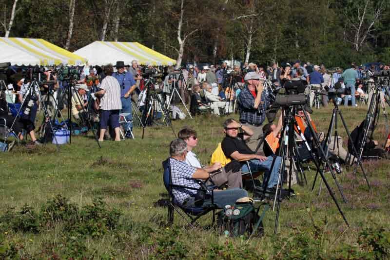 Nicht das Vogelfestival am Kemnader See sondern der Honey Buzzard Day in Falsterbo am 31.08.08 Foto: Hermann Knüwer